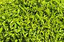 Зеленые листья, фото № 209937, снято 3 августа 2007 г. (c) chaoss / Фотобанк Лори
