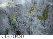Купить «Рисунок на стекле», фото № 210029, снято 14 августа 2018 г. (c) Данилин Василий Сергеевич / Фотобанк Лори