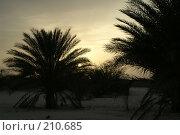 Купить «Закат в пустыне Сахара», фото № 210685, снято 13 июня 2006 г. (c) Ирина Игумнова / Фотобанк Лори