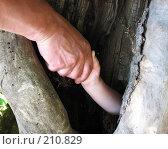 Купить «Мужчина вытаскивает ребёнка из дерева», фото № 210829, снято 9 июня 2007 г. (c) Екатерина / Фотобанк Лори
