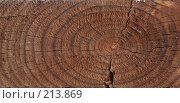 Купить «Фактура дерева», фото № 213869, снято 24 февраля 2008 г. (c) Liseykina / Фотобанк Лори
