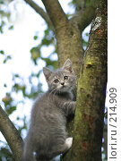 Купить «Котенок на дереве», фото № 214909, снято 31 августа 2004 г. (c) Морозова Татьяна / Фотобанк Лори