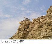 Купить «Чайка на скале», фото № 215401, снято 7 августа 2005 г. (c) Мария Малиновская / Фотобанк Лори