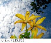 Купить «Цветы и небо», фото № 215853, снято 15 июля 2007 г. (c) Павел Филатов / Фотобанк Лори