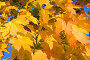 Осенняя красота, фото № 216657, снято 20 января 2017 г. (c) ElenArt / Фотобанк Лори