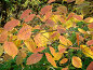 Осенние листья, фото № 216689, снято 20 января 2017 г. (c) ElenArt / Фотобанк Лори
