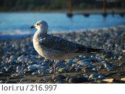 Купить «Отдыхающая чайка», фото № 216997, снято 18 октября 2007 г. (c) Елена Падарян / Фотобанк Лори