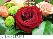 Купить «Роза», фото № 217641, снято 28 февраля 2008 г. (c) Баскаков Андрей / Фотобанк Лори