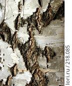 Купить «Березовая кора», фото № 218085, снято 29 января 2020 г. (c) ElenArt / Фотобанк Лори