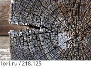Купить «Текстура старого дерева», фото № 218125, снято 20 февраля 2020 г. (c) ElenArt / Фотобанк Лори