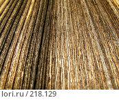 Купить «Текстура дерева», фото № 218129, снято 29 января 2020 г. (c) ElenArt / Фотобанк Лори
