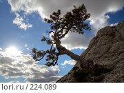 Купить «Живописная сосна на склоне горы, солнце в кадре», фото № 224089, снято 17 августа 2018 г. (c) Олег Титов / Фотобанк Лори