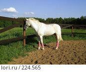 Купить «Белая лошадь», фото № 224565, снято 14 июня 2006 г. (c) Карасева Екатерина Олеговна / Фотобанк Лори