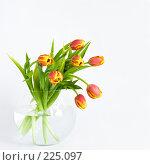 Купить «Красно-желтые тюльпаны на белом фоне», фото № 225097, снято 17 февраля 2019 г. (c) Ольга Хорькова / Фотобанк Лори