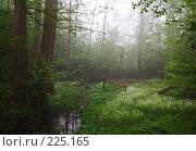 Купить «Туманное утро в лесу», фото № 225165, снято 27 апреля 2007 г. (c) Михаил Лавренов / Фотобанк Лори