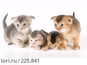 Купить «Котята в студии», фото № 225841, снято 11 декабря 2007 г. (c) Vladimir Suponev / Фотобанк Лори