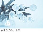 Купить «Букет тюльпанов в вазе, голубое тонирование», фото № 227489, снято 8 марта 2008 г. (c) Ольга Хорькова / Фотобанк Лори