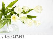 Купить «Букет белых тюльпанов в вазе», фото № 227989, снято 8 марта 2008 г. (c) Ольга Хорькова / Фотобанк Лори