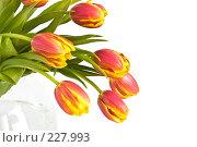 Купить «Букет красно-желтых тюльпанов в стеклянной вазе на белом фоне», фото № 227993, снято 8 марта 2008 г. (c) Ольга Хорькова / Фотобанк Лори