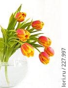 Купить «Букет красно-желтых тюльпанов в стеклянной вазе на светлом фоне», фото № 227997, снято 8 марта 2008 г. (c) Ольга Хорькова / Фотобанк Лори