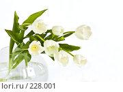 Купить «Букет белых тюльпанов в вазе», фото № 228001, снято 8 марта 2008 г. (c) Ольга Хорькова / Фотобанк Лори