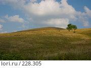 Купить «Холмистый пейзаж. Поле и облачное небо. Идеальная заставка.», фото № 228305, снято 19 августа 2007 г. (c) Harry / Фотобанк Лори
