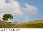 Купить «Холмистый пейзаж. Поле и облачное небо. Идеальная заставка.», фото № 228309, снято 19 августа 2007 г. (c) Harry / Фотобанк Лори