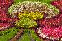 Цветочный фон, фото № 231257, снято 28 августа 2005 г. (c) Кравецкий Геннадий / Фотобанк Лори