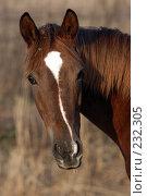 Купить «Голова лошади», фото № 232305, снято 6 ноября 2004 г. (c) Виктор Филиппович Погонцев / Фотобанк Лори