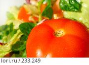 Купить «Свежий помидор на фоне салата», фото № 233249, снято 28 января 2008 г. (c) Александр Телеснюк / Фотобанк Лори