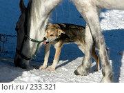 Купить «Дружба», фото № 233321, снято 21 февраля 2008 г. (c) Синицын Андрей / Фотобанк Лори