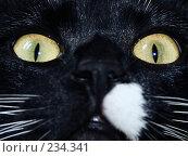 Купить «Кошка», фото № 234341, снято 19 марта 2008 г. (c) Константин Голубкин / Фотобанк Лори