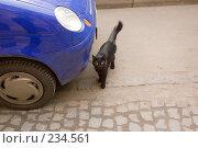 Купить «Городской кот», эксклюзивное фото № 234561, снято 7 мая 2007 г. (c) Александр Алексеев / Фотобанк Лори