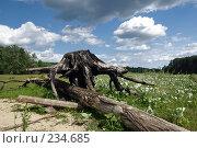 Купить «В объятьях спрута», фото № 234685, снято 24 июня 2007 г. (c) Алексей Тишкин / Фотобанк Лори