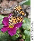 Купить «Бабочка на цветке», фото № 235333, снято 6 мая 2006 г. (c) griFFon / Фотобанк Лори