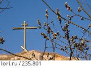 Купить «Вербное воскресение», фото № 235801, снято 28 марта 2008 г. (c) Игорь Момот / Фотобанк Лори