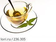 Купить «Чашка чая», фото № 236305, снято 23 апреля 2018 г. (c) Кравецкий Геннадий / Фотобанк Лори