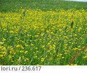 Купить «Желтые полевые цветы», фото № 236617, снято 11 июня 2007 г. (c) Ольга Хорькова / Фотобанк Лори