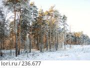 Купить «Зимний пейзаж с соснами», фото № 236677, снято 7 января 2008 г. (c) Дмитрий Яковлев / Фотобанк Лори