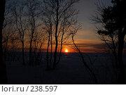 Купить «Силуэты деревьев», фото № 238597, снято 23 января 2019 г. (c) Шемякин Евгений / Фотобанк Лори