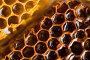 Темный и светлый мед в сотах, фото № 240145, снято 24 октября 2007 г. (c) Виноградов Илья Владимирович / Фотобанк Лори
