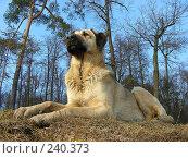 Купить «Собачка отдыхает на природе», эксклюзивное фото № 240373, снято 26 марта 2008 г. (c) lana1501 / Фотобанк Лори