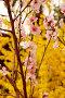 Вишня в цвету, фото № 241437, снято 23 марта 2008 г. (c) Лифанцева Елена / Фотобанк Лори