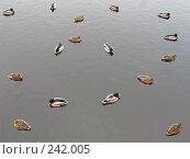Купить «Много уток на сером фоне», фото № 242005, снято 8 марта 2008 г. (c) Юлия Селезнева / Фотобанк Лори