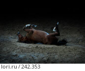 Купить «Лошадь валяется», фото № 242353, снято 22 сентября 2007 г. (c) Анастасия Некрасова / Фотобанк Лори