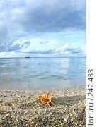 Купить «Ракушка на берегу моря», фото № 242433, снято 16 марта 2008 г. (c) Татьяна Белова / Фотобанк Лори