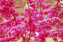 Цветущий кустарник, фото № 243137, снято 24 марта 2017 г. (c) Лифанцева Елена / Фотобанк Лори