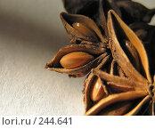 Купить «Бадьян (Анис звездчатый)», фото № 244641, снято 3 октября 2007 г. (c) ikheid / Фотобанк Лори