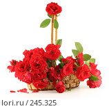 Купить «Корзина с красными розами», фото № 245325, снято 28 июня 2007 г. (c) Елена Блохина / Фотобанк Лори