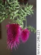 Сухоцвет. Стоковое фото, фотограф Akunia-Gerrero N.V. / Фотобанк Лори